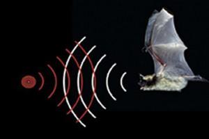 bat_ultrasound