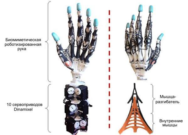 robotic_hand_r